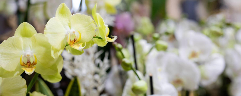 Floraison - fleuriste Cambrai