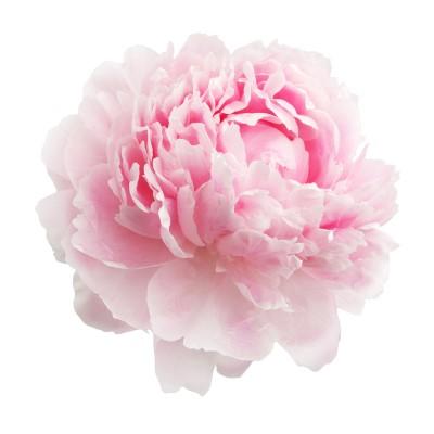 fleuriste publier